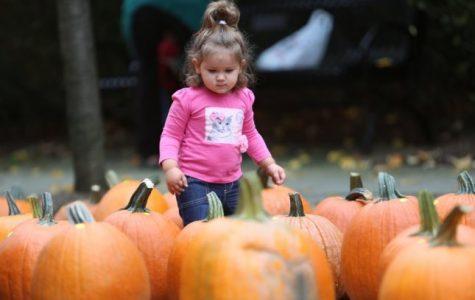 Pelham Children's Center hosts annual Pumpkin Festival and Kids Fun Run Oct. 12