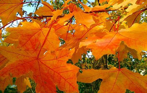 Village of Pelham fall leaf collection begins Oct. 15