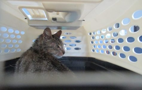 Rabid cat caught in Yonkers Thursday after biting and scratching man