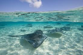 Stingray City in Grand Cayman.