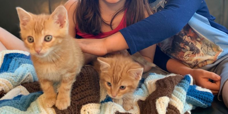 Pet adoption mini-boom comes with need to stay at home in Pelham
