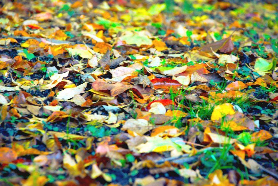 Foto Feature: Autumn colors Pelham