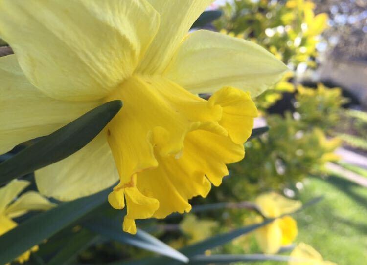 Foto+Feature%3A+Pelham+spring+in+full+color